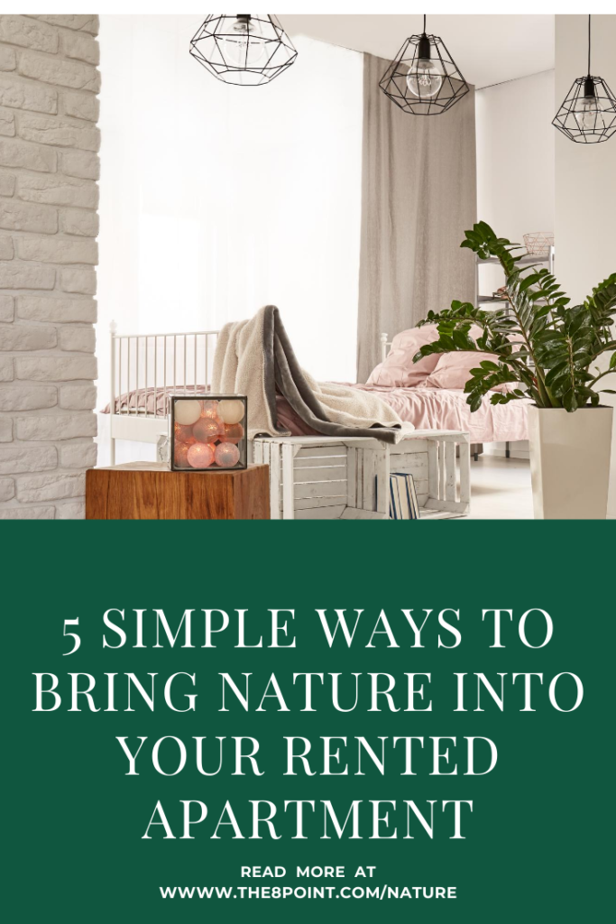 5 Simple Ways to Bring Nature into Your Rented Apartment